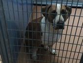 كلب يقتل طفلاً رضيعاً فى ولاية كاليفورنيا الأمريكية