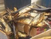 ضبط 1300 كيلو رنجة غير صالحة بسيارة قادمة من البحيرة لتسويقها بكفر الشيخ