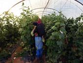 كل ما تريد معرفته عن مشروعات الصوب الزراعية فى 5 معلومات