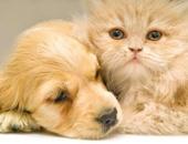 المشاهير يدعون المواطنين بعدم التخلص من الحيوانات الأليفة: لا تنقل كورونا