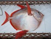 باحثون أمريكيون يكتشفون أول سمكة فى العالم بدم دافئ