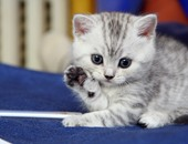 """خطوات بسيطة لتسهيل عملية الولادة على """"قطتك"""""""