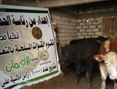 تعاون بين الرئاسة والأورمان لتوزيع رؤوس ماشية على الأسر الأولى بالرعاية