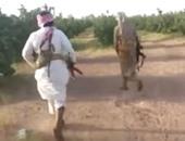 بالفيديو.. القبض على حوثى تسلل لمزرعة سعودية