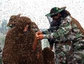 مقتل شاب بعد تعرضه للسعات أكثر من ألف نحلة فى متنزه بأريزونا