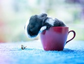 مصور بنغالى يسجل لحظات نمو أرنب ليشجع على تربيتها.. أحلى من القطط