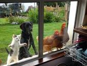 صور مرحة ترصد طلب بعض الحيوانات الأليفة الدخول إلى المنزل