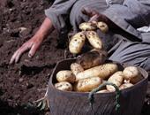 هيئة الرقابة الروسية: استئناف استيراد الفاكهة والخضروات المصرية عدا البطاطس