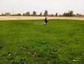 الحكومة تقصر زراعة الأرز على 8 محافظات العام الحالى .. تعرف عليها