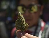 """بعد ضبط الداخلية كمية منه.. تعرف على خطورة مخدر """"الماريجوانا"""""""