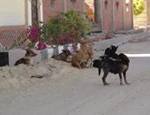 حمدى نصر يكتب : الحل الأمثل المربح لمشكلة الكلاب الضالة