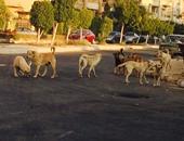 صحافة المواطن.. انتشار الكلاب الضالة فى القاهرة الجديدة ومهاجمتها للمواطنين باستمرار
