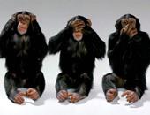 عشان تبقى أذكى.. العلماء الصينيون يحقنون القرود بحمض البشر النووى