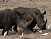 ضبط أكبر كمية من قرون وحيد القرن مهربة داخل شحنة قطع سيارات