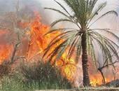 اندلاع حريق فى مزارع نخيل بقرية المعصرة بالداخلة فى الوادى الجديد