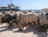 الزراعة تعليق استيراد الحيوانات من السودان ولجان تقصى بحثا عن الوادى المتصدع