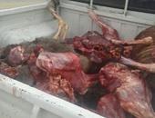 العثور على 200 حمار نافق مسلوخ بترعة القاصد بكفر الشيخ