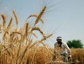 نواب: الحكومة ستستورد 6 ملايين طن قمح من الخارج لإنتاج رغيف الخبز المدعم