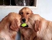 دراسة بريطانية تثبت قدرة الكلاب على اكتشاف السرطان بدقة