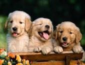 خبير فى تربية الكلاب ينصحك عند الشراء.. بص على عينيه وأنفه