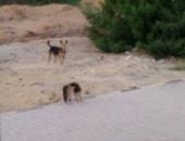 كلب ضال يعقر 16 شخصا فى أبنوب بأسيوط