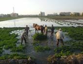 وزير الرى: الدولة لن تسمح بزراعات الأرز المخالفة وستطبق الغرامات