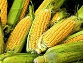 البحوث الزراعية: استنباط أصناف جديدة للحبوب لمواجهة التغيرات المناخية