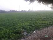 صحافة المواطن: بالصور.. ورد النيل يغطى المياه بقرية السالمية فى كفر الشيخ