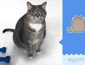 """بالصور.. قطة تجسد كل إيموشنز """"فيس بوك"""" وتتحول لحديث السوشيال ميديا"""