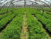 زراعة المنوفية : حصر 1676 صوبة إنتاج ومشتل موزعة على مراكز المحافظة