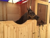 بالصور..  استمرار فعاليات مهرجان الخيول بسقارة لتنشيط السياحة فى مصر