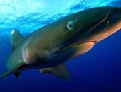 السياحة و المصايف تنفى ظهور أسماك القرش على شواطئ الإسكندرية