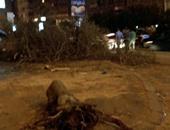 """""""صحافة المواطن""""..مذبحة أشجار فى مصر الجديدة"""