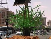 صحافة المواطن: بالصور: قارئ يشارك بصور لأحد ميادين مطروح بعد التطوير
