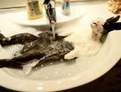 """10 صور تبين عشق الحيوانات للاستحمام أكثر من أى شىء """"بالذات فى الصيف"""""""