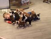 فيديو مدهش لطفل يلعب مع 16 كلبًا يعيشون فى بيته