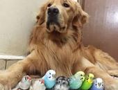 كلب و8 عصافير وفأر يصبحون أفضل أصدقاء