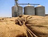 المنتجين الزراعيين : الحكومة تتجاهل  تحديد سعر شراء القمح من الفلاحين