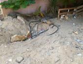 صحافة المواطن: بالصور.. مياه الصرف والأسلاك العارية تنذر بكارثة فى الشروق