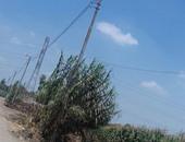 """صحافة مواطن: أعمدة الإنارة مضاءة فى عز الضهر بإحدى قرى """"المنوفية"""""""