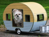 كندى يطلق مشروعًا لإسكان الكلاب الضالة.. ويصمم لها منازل متكاملة