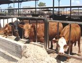 البرازيل تتطلع لفتح السوقين السعودية والكندية أمام لحوم الأبقار