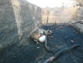 إصابة مسن ونفوق 7 رؤس ماشية فى حريق ألتهم منزل وحوشين بالمراغة فى سوهاج