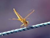 5 نصائح طبية تجنبك مشاكل حشرات الفراش والملابس