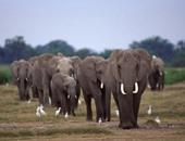 1000 حيوان برى للبيع بسبب الجفاف ..تعرف على الدولة صاحب هذا العرض؟