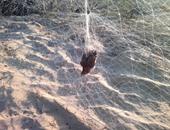 شمال سيناء تقر ضوابط صيد طيور السمان والشرشير.. تعرف على التفاصيل