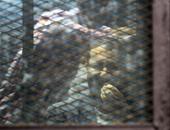 """دخول وفد الاتحاد الأوروبى لحضور جلسة علاء عبد الفتاح فى """"أحداث الشورى"""""""