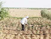 تقرير حكومى: مصر خسرت 326 ألف فدان أراضى زراعية خلال 35 عاما