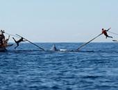 العلماء يستخدمون الطائرات المسيرة لمتابعة صحة الحيتان