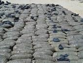 ضبط 20 طن بانجو فى جنوب سيناء وربع طن أفيون بأسوان